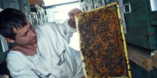 Cat te costa sa incepi o afacere cu albine. Sfaturile unui tanar apicultor