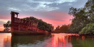 VIDEO Uimitoarea padure plutitoare dintr-o epava: poate fi admirata intr-un golf din Sydney