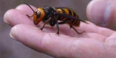 5 civili si doi subofiteri de la SMURD, la spital, dupa ce au fost atacati de un roi de viespi salbatice
