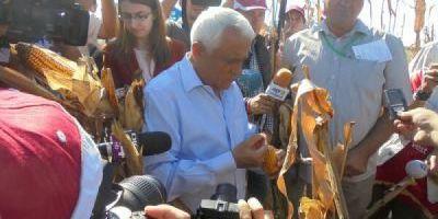 Ministrul Petre Daea, la recoltat, de Ziua porumbului, la Orezu: