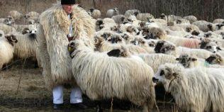 Ciobanul de 100 de ani: este cel mai varstnic salariat din Romania si de dragul oilor sale nu vrea sa auda de pensie
