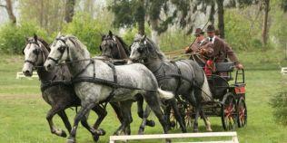 VIDEO Unde pot fi admirati cei mai frumosi cai lipitani din Romania. Istoria hergheliei vestite in toata Europa