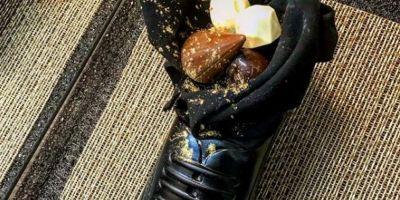 FOTO Gluma, ofensa? Premierul Japoniei a fost servit in Israel cu praline de ciocolata in pantofi
