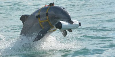 Delfinii soldati ai Marinei ucrainene ramasi in Crimeea au murit de foame